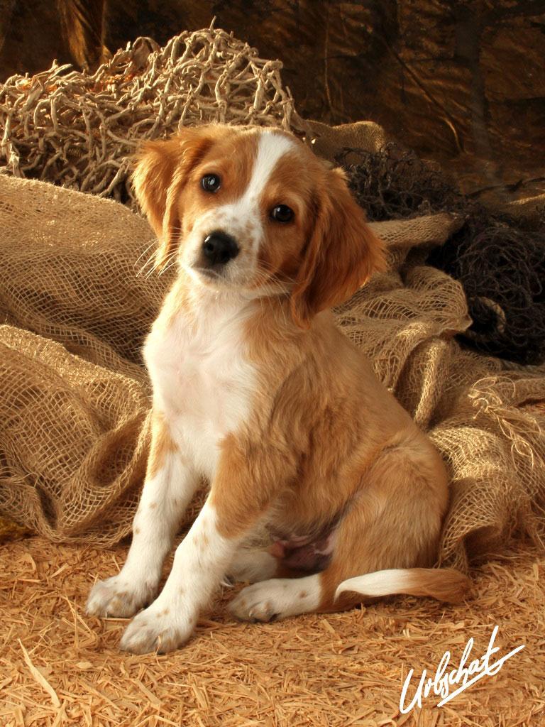 Hund im Stall